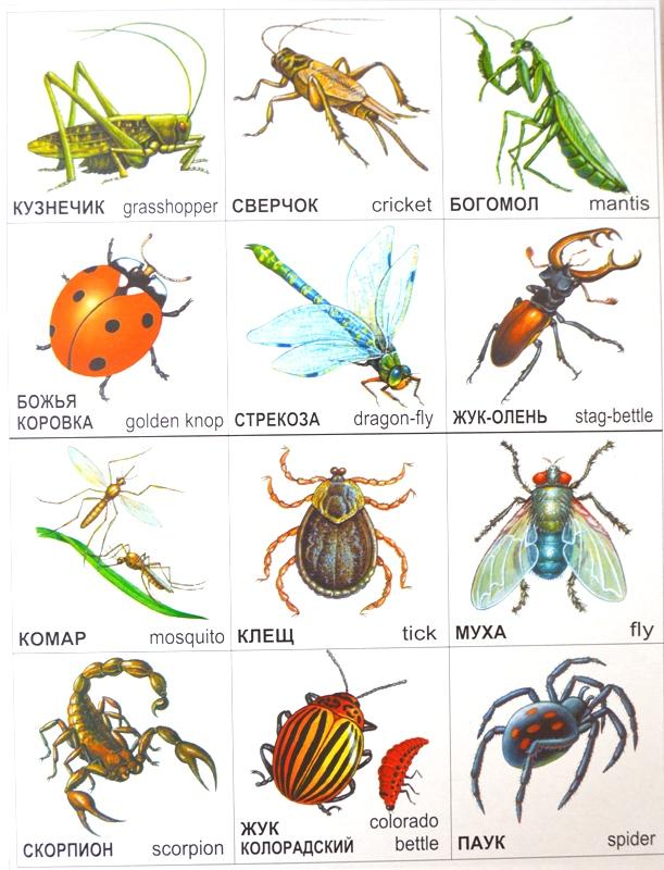 насекомые список с картинками земель