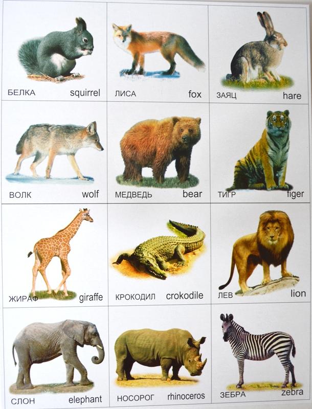 Собираем картинки животных
