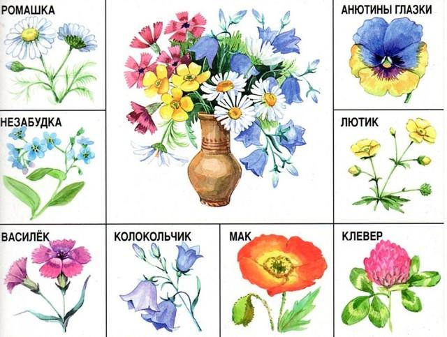 Картинки с названиями цветов для детей